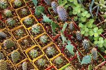 اشتغال مستقیم یکهزار نفری در بخش گل و گیاه آمل