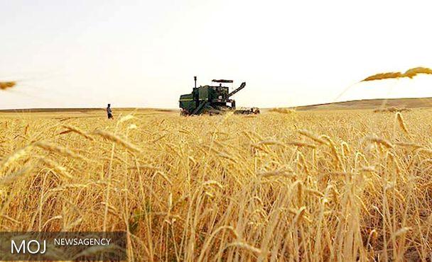 خرید تضمینی گندم در کرمانشاه ۱۰ درصد افزایش یافته است