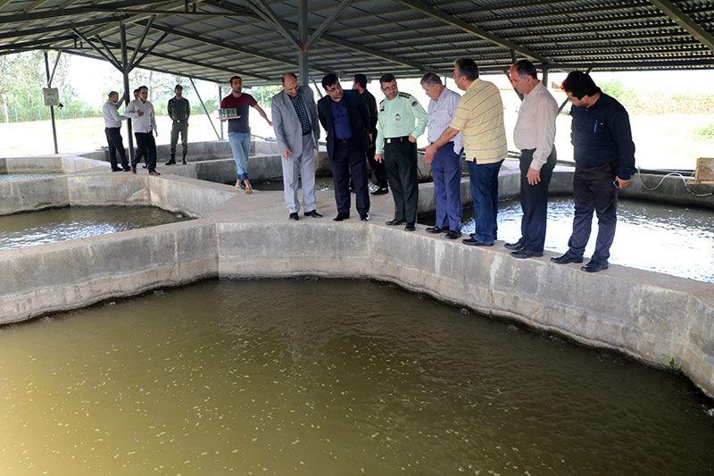 بازدید معاون  شیلات ایران از مزرعه پرورش ماهیان خاویاری در گیلده شفت