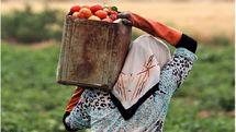 اعتبارات ویژه دولت برای توسعه اشتغال در روستاهای کشور