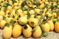 پیش بینی برداشت ۳۰ هزار تن خربزه گرگاب از مزارع شهر گرگاب