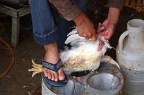 مردم از خرید مرغ زنده، شکار و مصرف پرندگان وحشی خودداری کنند