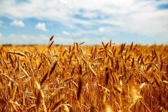 تمدید بیمه ۵ محصول کشاورزی در گیلان