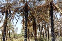 خسارت بیش از 305 میلیون تومانی آتش به باغداران روستای کلو