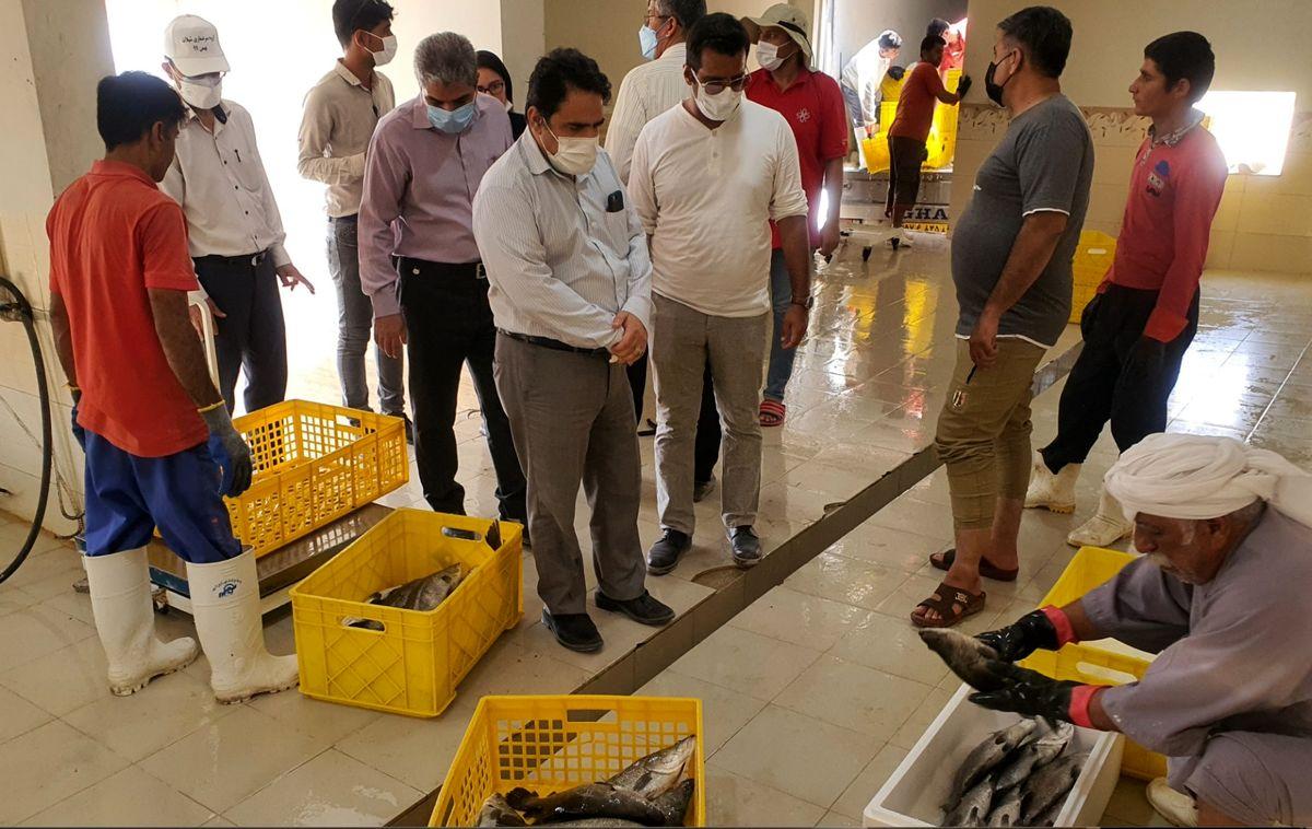 مدیر کل شیلات هرمزگان از مرکز تکثیر ماهی نیکسا بازدید کرد