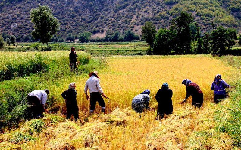 نباید قانون تمرکز وظایف بخش کشاورزی معلق شود/ قانون انتزاع نوعی عقب گرد محسوب می شود