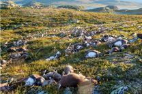 صاعقه در نروژ صدها گوزن را کشت