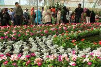 سالانه ۷ میلیون آنتوریوم شاخه بریده در مازندران تولید و صادر میشود