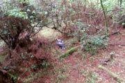 بازگشت  یک  بهله عقاب به طبیعت در شهرستان رضوانشهر