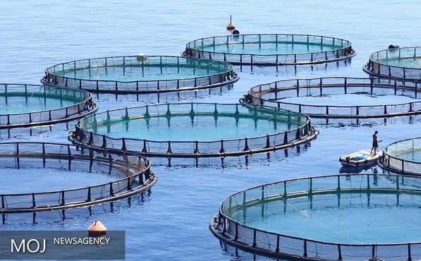 اجرای پروژه ۳ هزار و ۵۰۰ تن پرورش ماهی در قفس در دریا