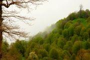 شوک خشکی بر جنگلهای هیرکانی مازندران تاثیرگذار بود/آسیب آفت شبپره شمشاد بر درختان جنگلی