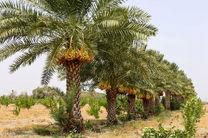 همایش «یوم النخله» در بندر چوئبده آبادان برگزار شد