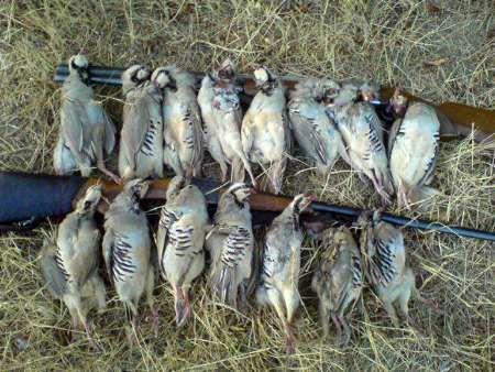 متخلفان شکارپرندگان در بوئین میاندشت دستگیر شدند