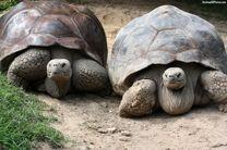 آیا معمای شکلگیری لاک لاکپشت ها را می دانید