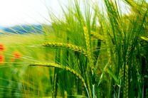 افزایش تولید محصولات کشاورزی در اردبیل