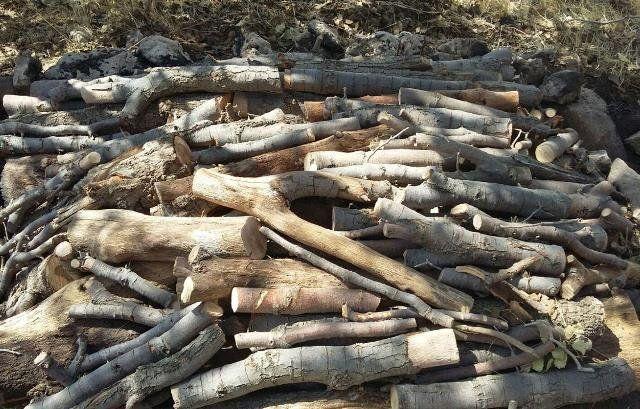 کشف 500 کیلو چوب قاچاق در اصفهان / دستگیری یک نفر توسط نیروی انتظامی