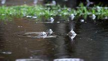 افزایش 30 درصدی بارش ها نسبت به میانگین بلند مدت در شهرضا