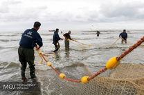 افزایش 46 درصدی رشد ارزش اقتصادی  صید ماهی