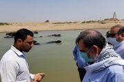 دولت باید پاسخگوی ضرر و زیان های ناشی از سو مدیریت آب در استان خوزستان باشد