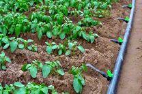 تجهیز بیش از 4 هزار هکتار از زمینهای کشاورزی هرمزگان به سامانه آبیاری نوین
