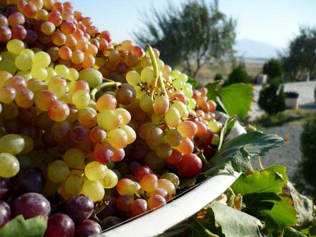 تبدیل ارومیه به رتبه اول صادرات انگور در کشور