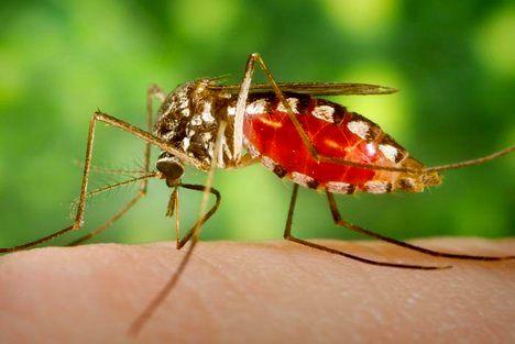 ایران در حذف مالاریا پیشرو است/کمتر از ۱۰۰ مورد مبتلا