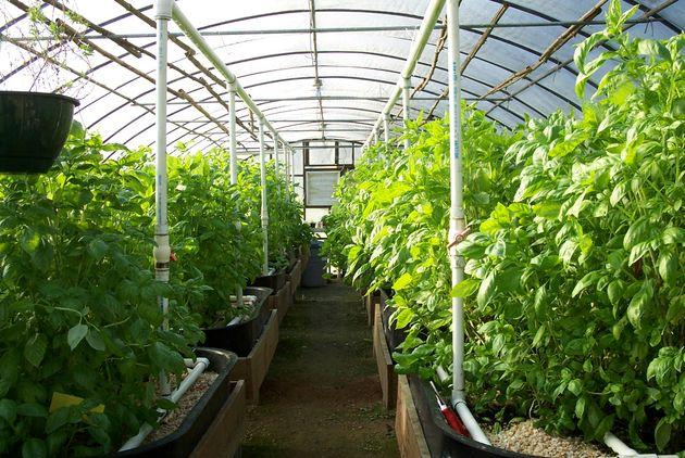 12 هزار و 157 هکتار گلخانه در کشور وجود دارد