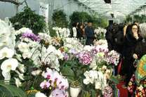 جشنواره ارکیده ظرفیتی برای اشتغال پایدار در نوشهر