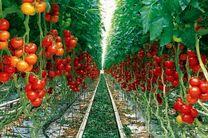 صادرات 80 درصد تولیدات گلخانه های اصفهان به خارج از کشور