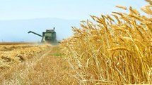اراضی دشت مغان سر سبز تر از همیشه / ۵۸۰ هزار تن گندم در استان اردبیل تولید میشود