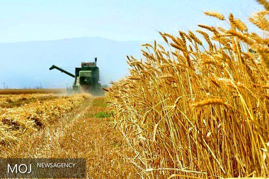 خرید تضمینی ۳۴۰ هزار تن گندم در لرستان
