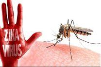 هراس از گسترش ویروس زیکا در آمریکا