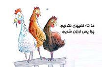 مرغ ها از پرواز برگشتند/ مدیریت نادرست این بار برای مرغداران