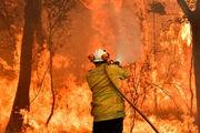 1.25 میلیارد حیوان در آتش سوزی استرالیا تلف شدند