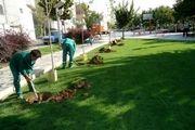 لزوم فرهنگ سازی و مشارکت مردم در راستای توسعه فضای سبز شهری